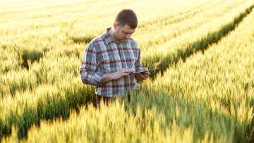 Download the Cereal Disease ID App